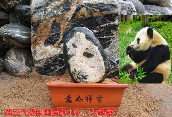 龙8国际娱乐城奇石国宝熊猫
